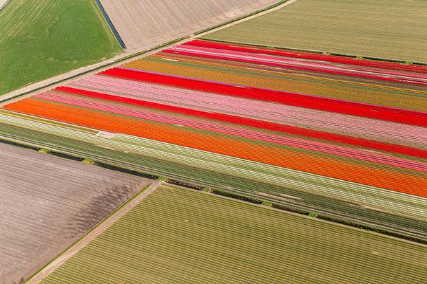 Aerial Tulip Captures