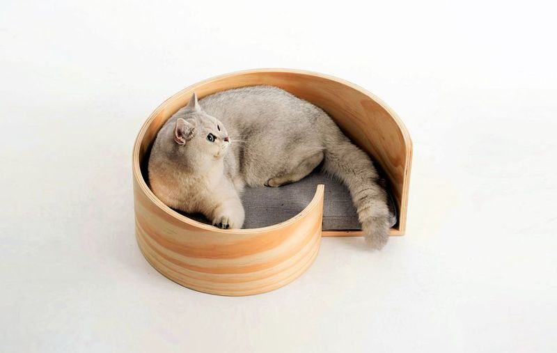 Sculpted Snail-Inspired Feline Beds