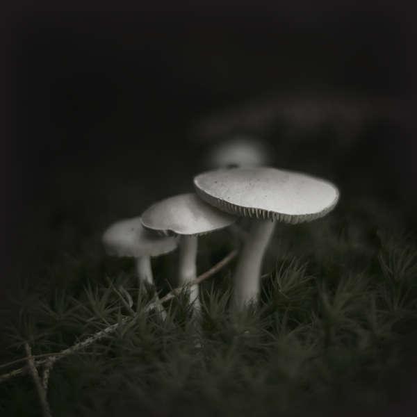 Mysterious Mushroom Photography