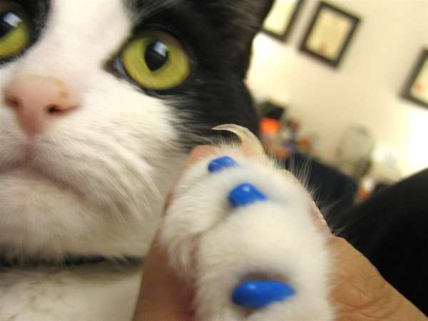 Nail Polish For Cats Feline Manicures In Crazy Colors