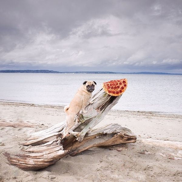 Oddly Placed Pizza Photography