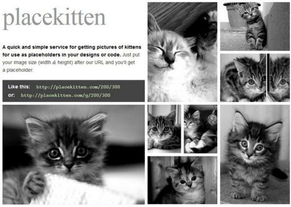 Feline Web Design Fillers