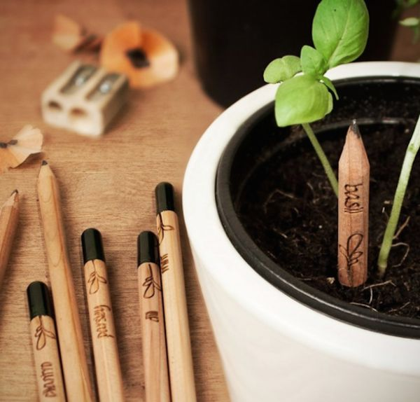 Sprouting Pencil Plants