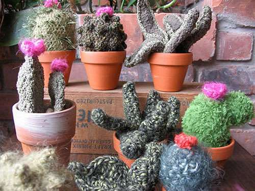 Crocheted Cacti