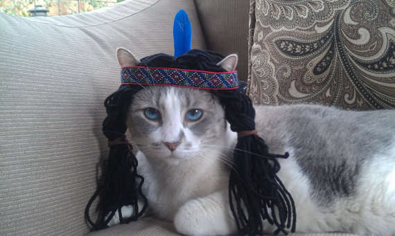 Disney Princess Feline Attire