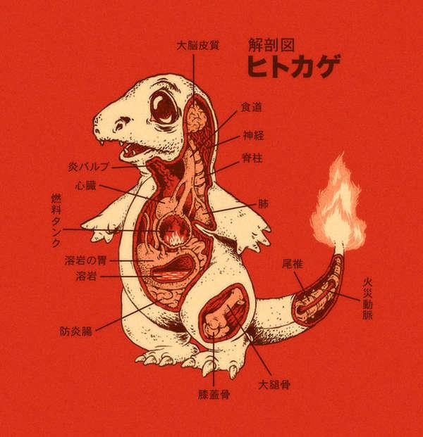 Anatomical Anime Charts