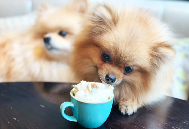 Dog-Friendly Cafe Events