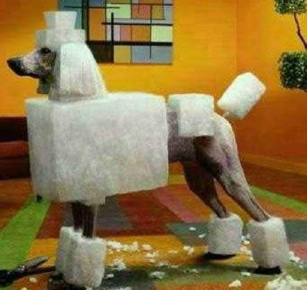 Cubist Canine Coifs Poodle Haircuts