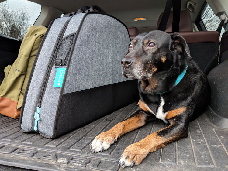 Travel-Friendly Dog Beds