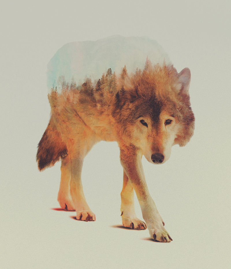 Double Exposed Animal Portraits