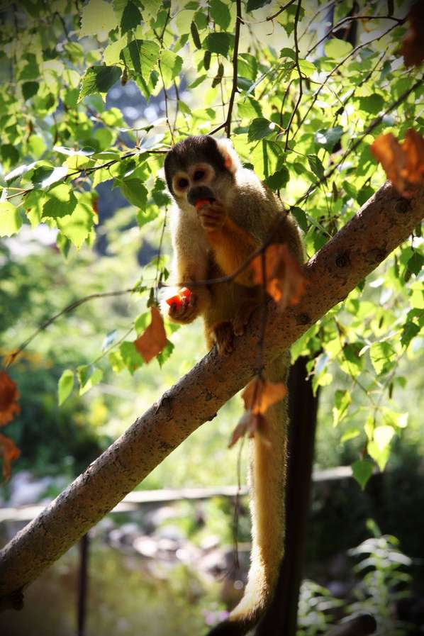 Monkey-Loving Photography