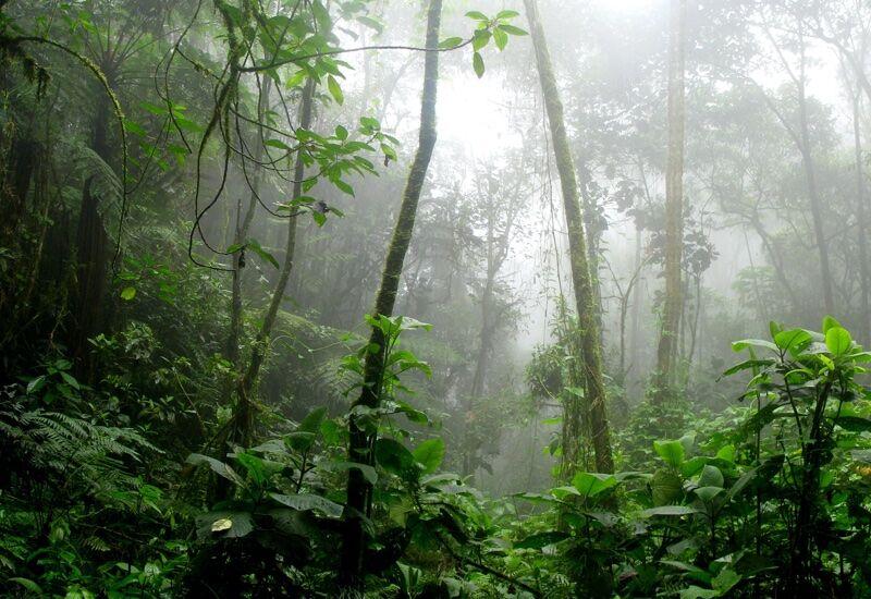 Sustainable Amazon Rainforest Projects