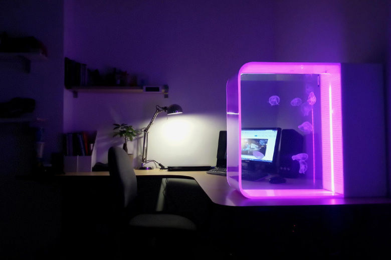 LED-Lit Jellyfish Aquariums