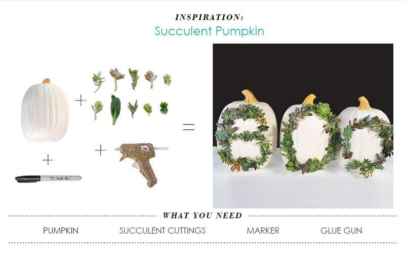 DIY Succulent-Adorned Pumpkins