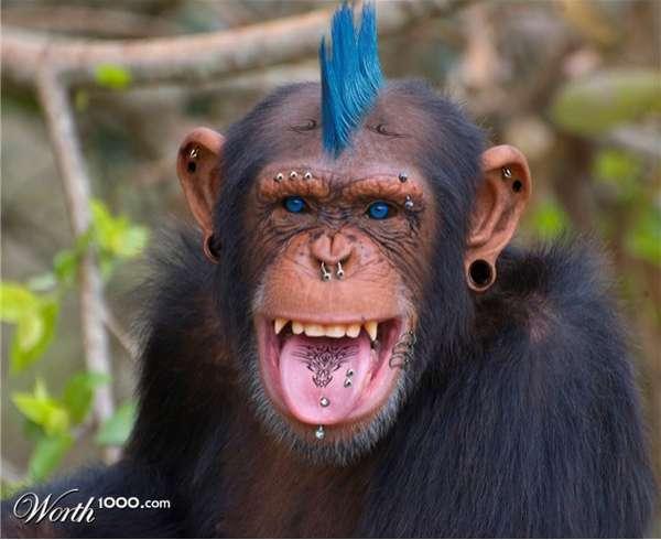Punk Animal Photoshopping
