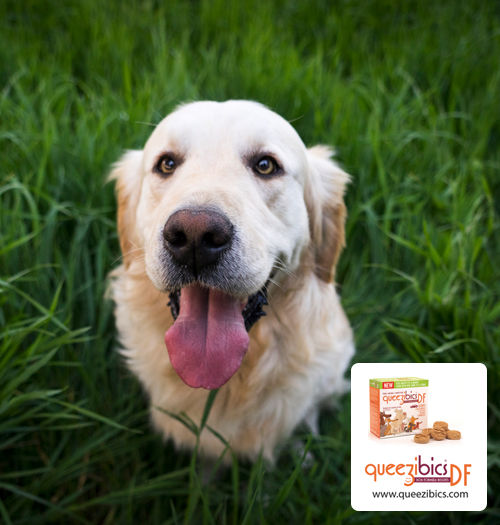 Car Sickness-Preventing Dog Treats