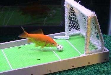 Teach Fish Tricks