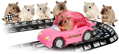 Racecars for Rodents
