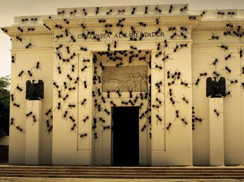 Insect Infestation Installations
