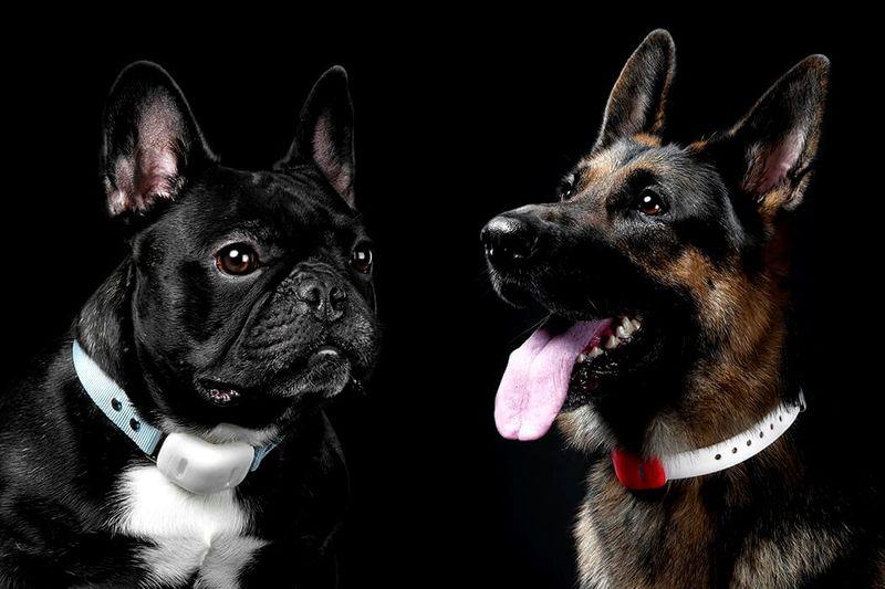 Fitness Tracker Dog Collars