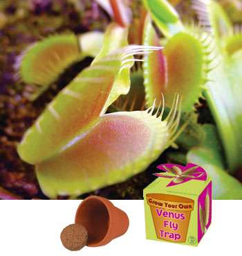 Grow Your Own Venus Fly Trap