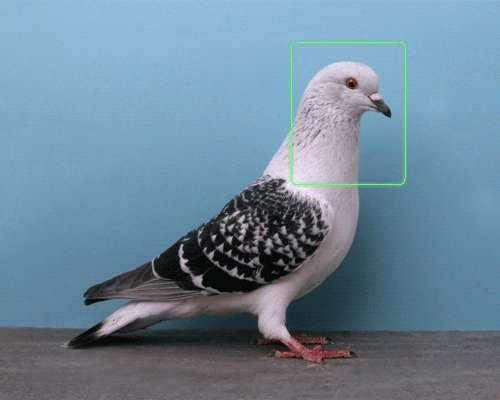 Intriguing Identification Animations