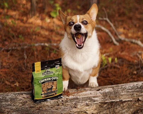 Protein-Packed Pet Treats