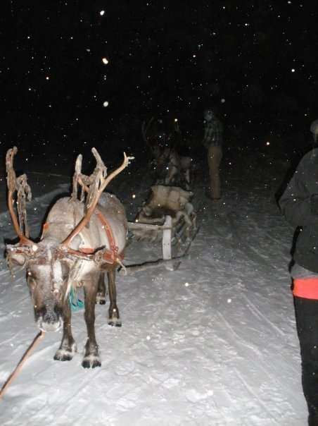 Reindeer Sledding Tours