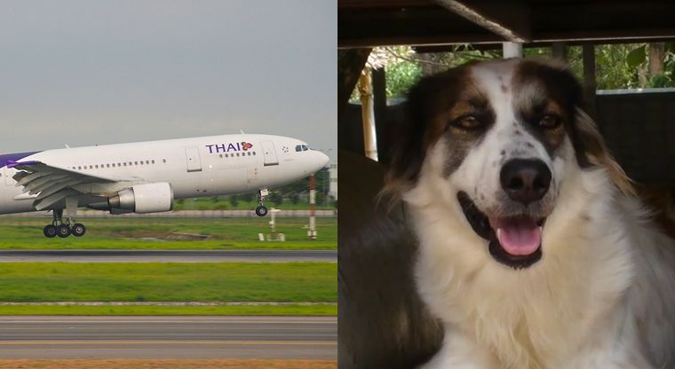 Airplane Animal Adoption Services