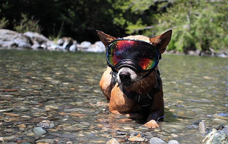 Protective Outdoor Canine Eyewear