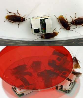 Fake Insects For Pest Control