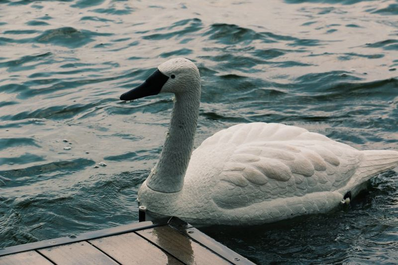 Water-Monitoring Robotic Swans