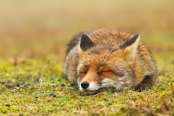Moody Fox Photography