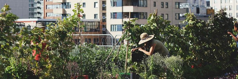 Inclusive Rooftop Urban Farms