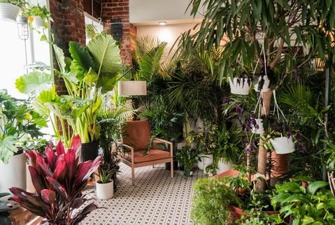 Modern Houseplant Deliveries