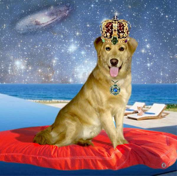 Galactic Canine Blogs