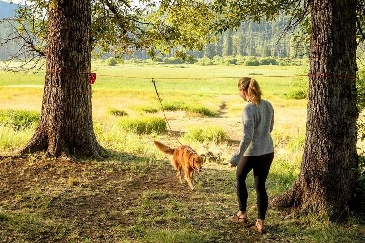 Dog-Hitching Campsite Harnesses