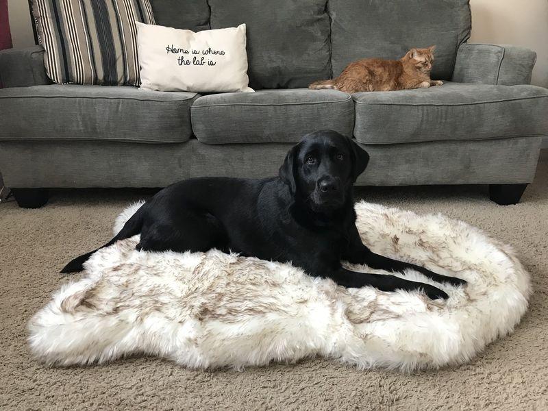 Rug-Shaped Dog Beds