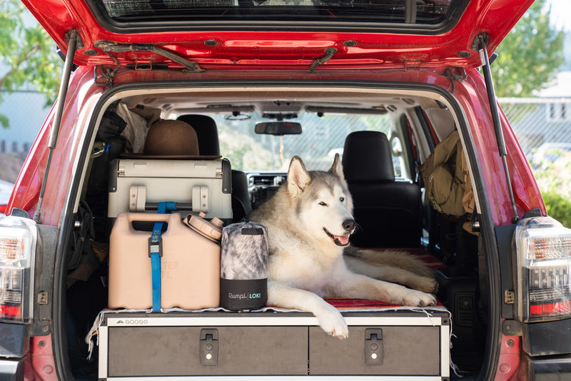 Dog Influencer-Approved Beds