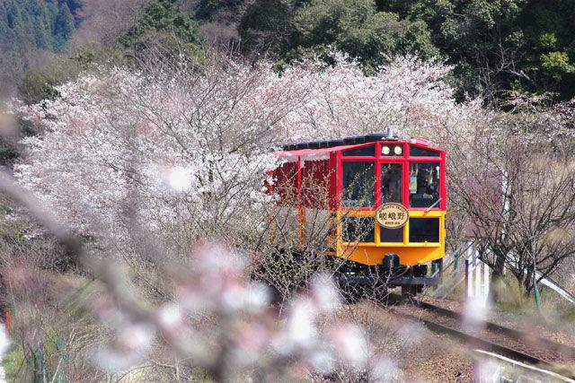 Lovebird Locomotive Rides