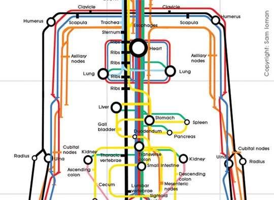 Anatomical Subway Maps