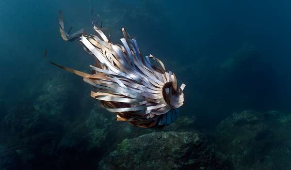 Underwater Pollution Installations