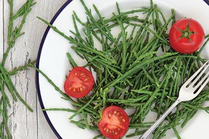 Sustainably Grown Sea Greens
