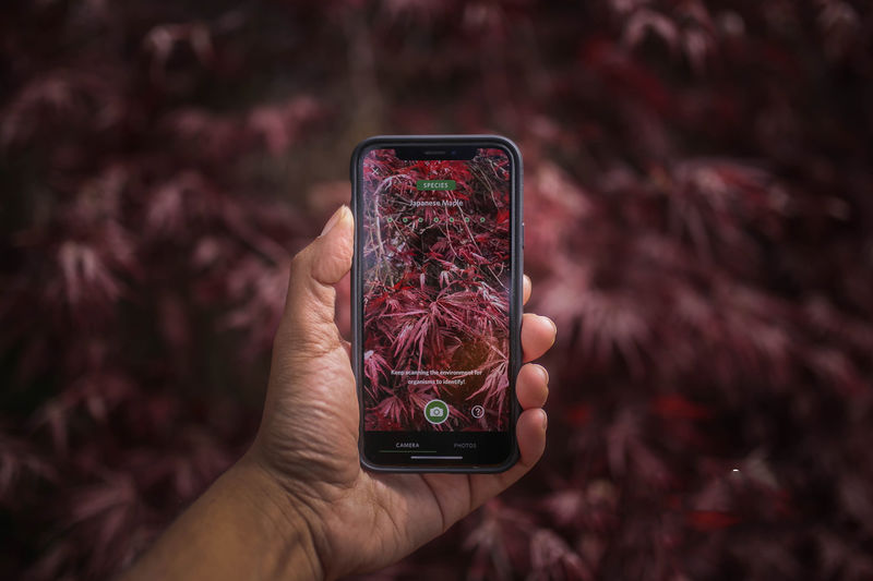 Species-Identifying Apps