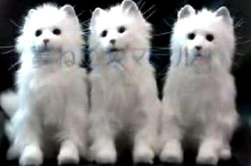 Realistic Robo-Cats