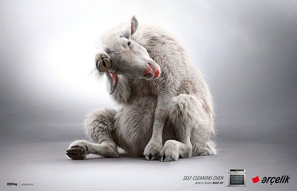 Self-Cleaning Animal Ads