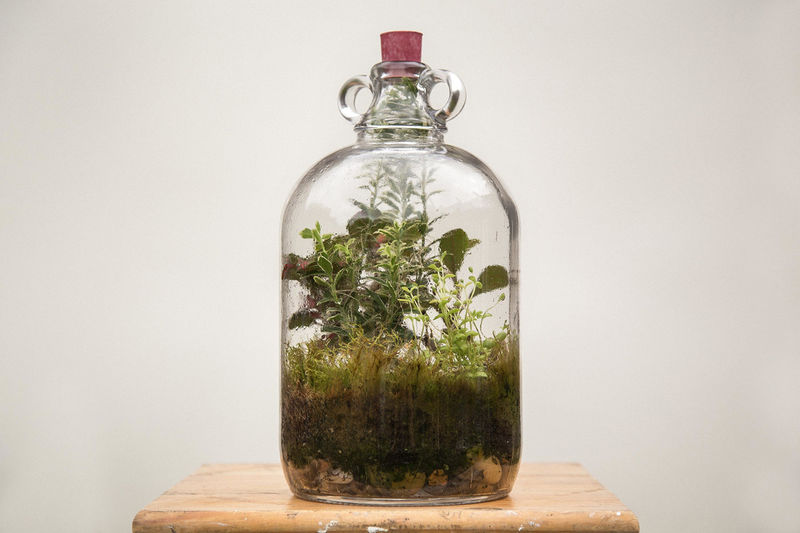 Self-Sustaining Terrariums