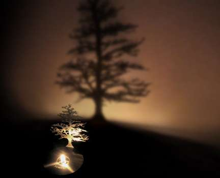 Shadow Trees Create Your Own Forest Out Of Light