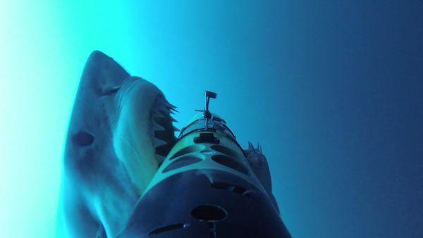 Shark Attack Videos