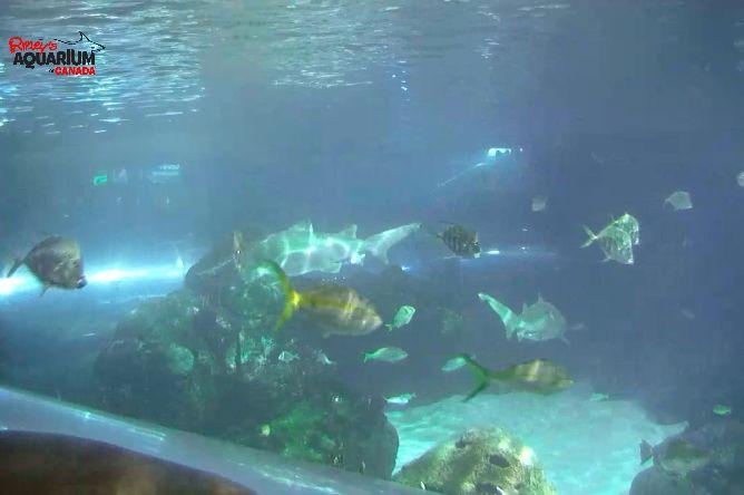 Livestreamed Shark Tanks